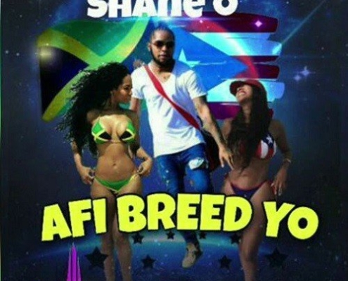 Shane O Afi Breed Yo
